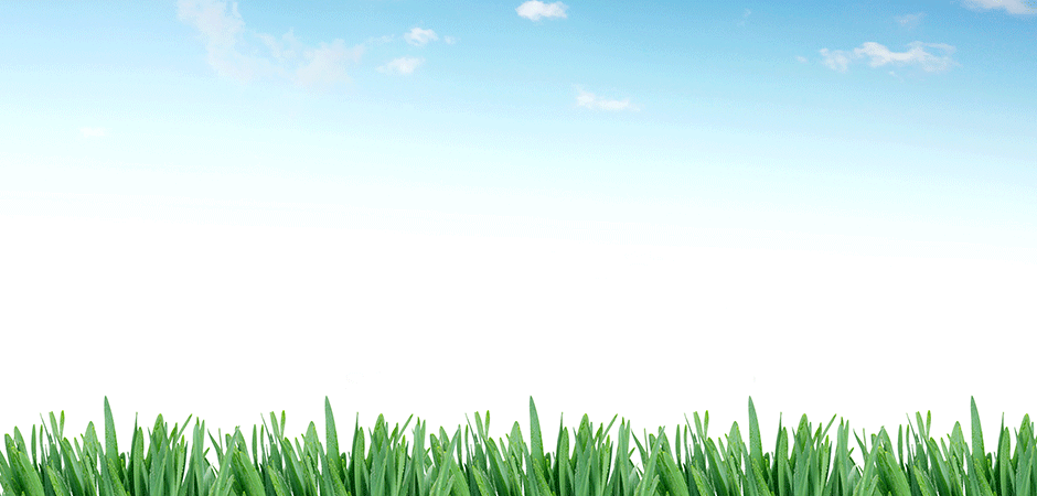 seatware_grassbanner